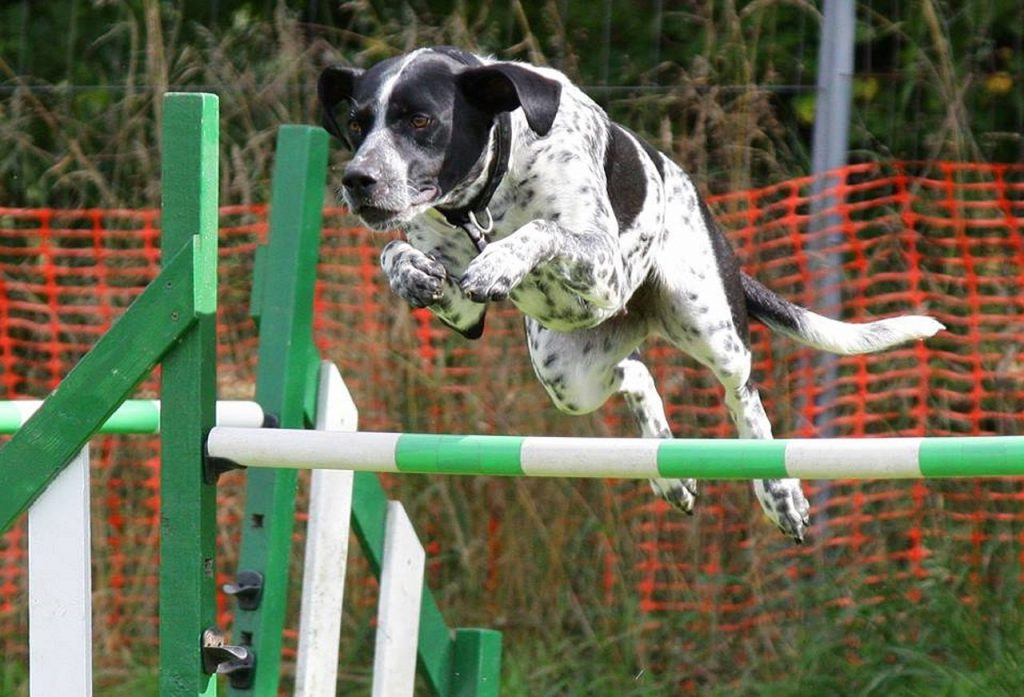 Performing content metaphor: dog jumping hurdle