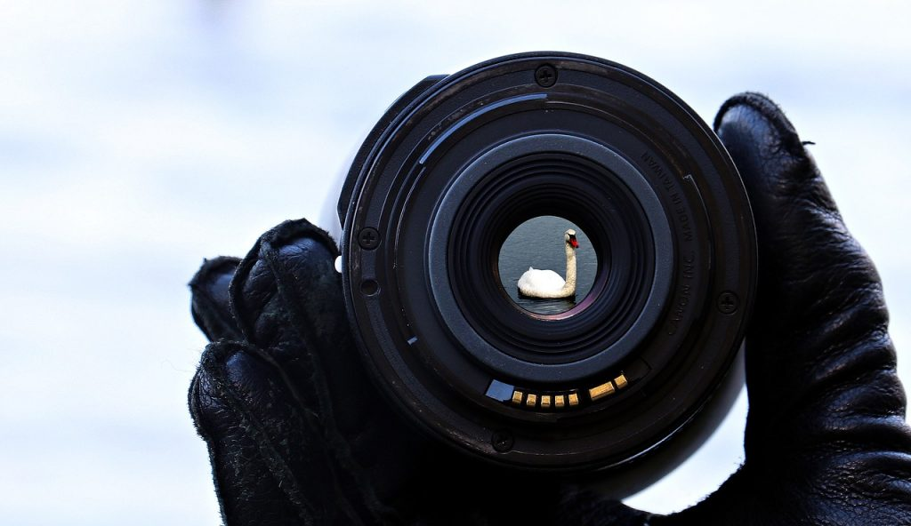 A hand holding a lens focused on a swan
