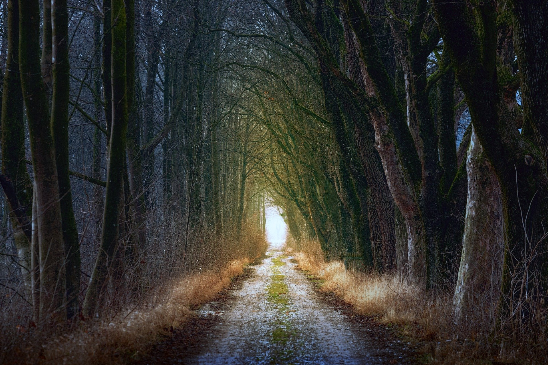 The hero's journey in story-telling is like this wooded path leading to the light in the distance